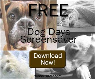 Dog's screen saver